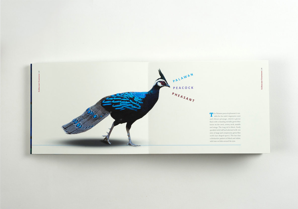 Iridescent-Creatures-catalog-12-Thanh-Nguyen-design