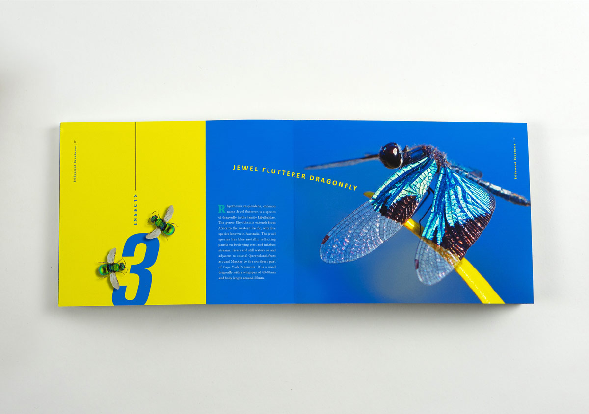 Iridescent-Creatures-catalog-13-Thanh-Nguyen-design