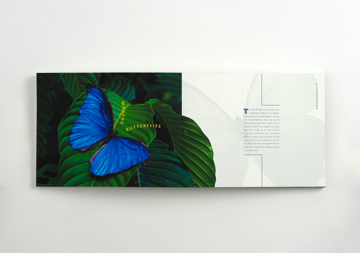 Iridescent-Creatures-catalog-17-Thanh-Nguyen-design