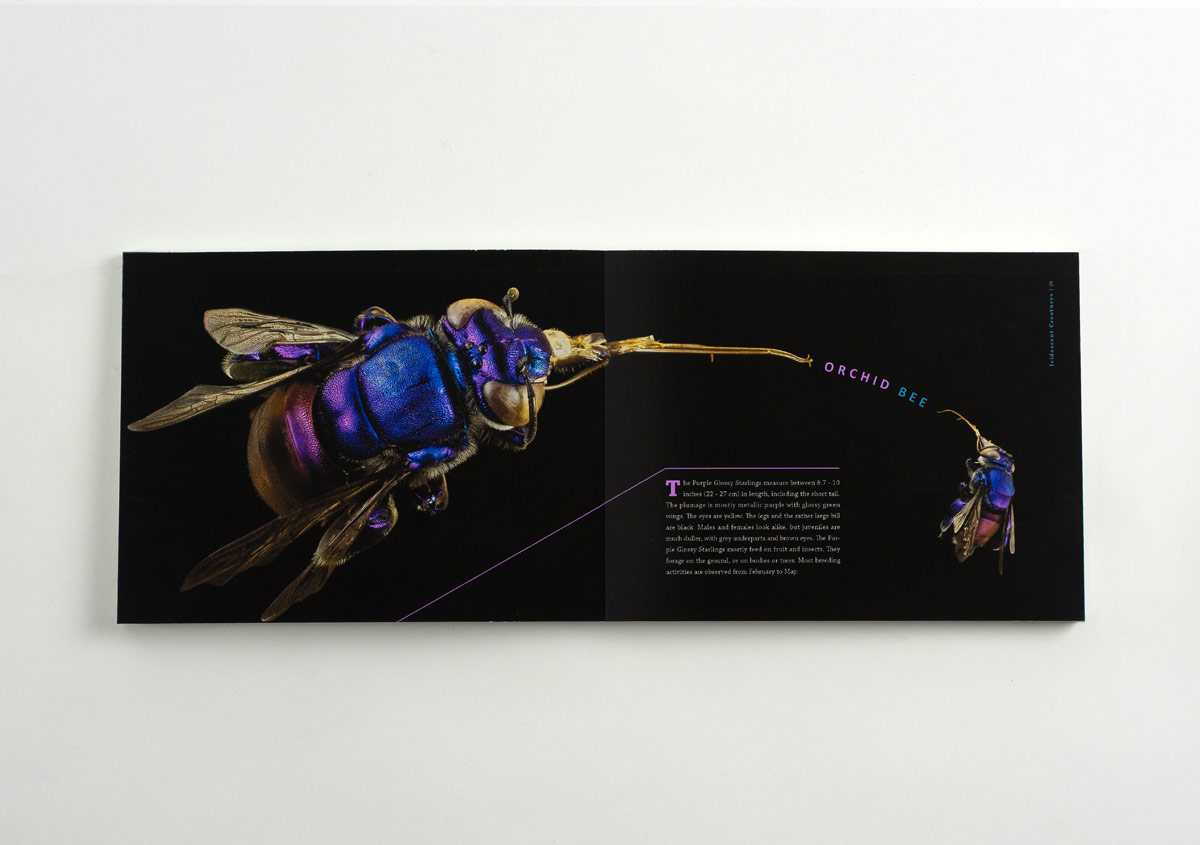 Iridescent-Creatures-catalog-19-Thanh-Nguyen-design