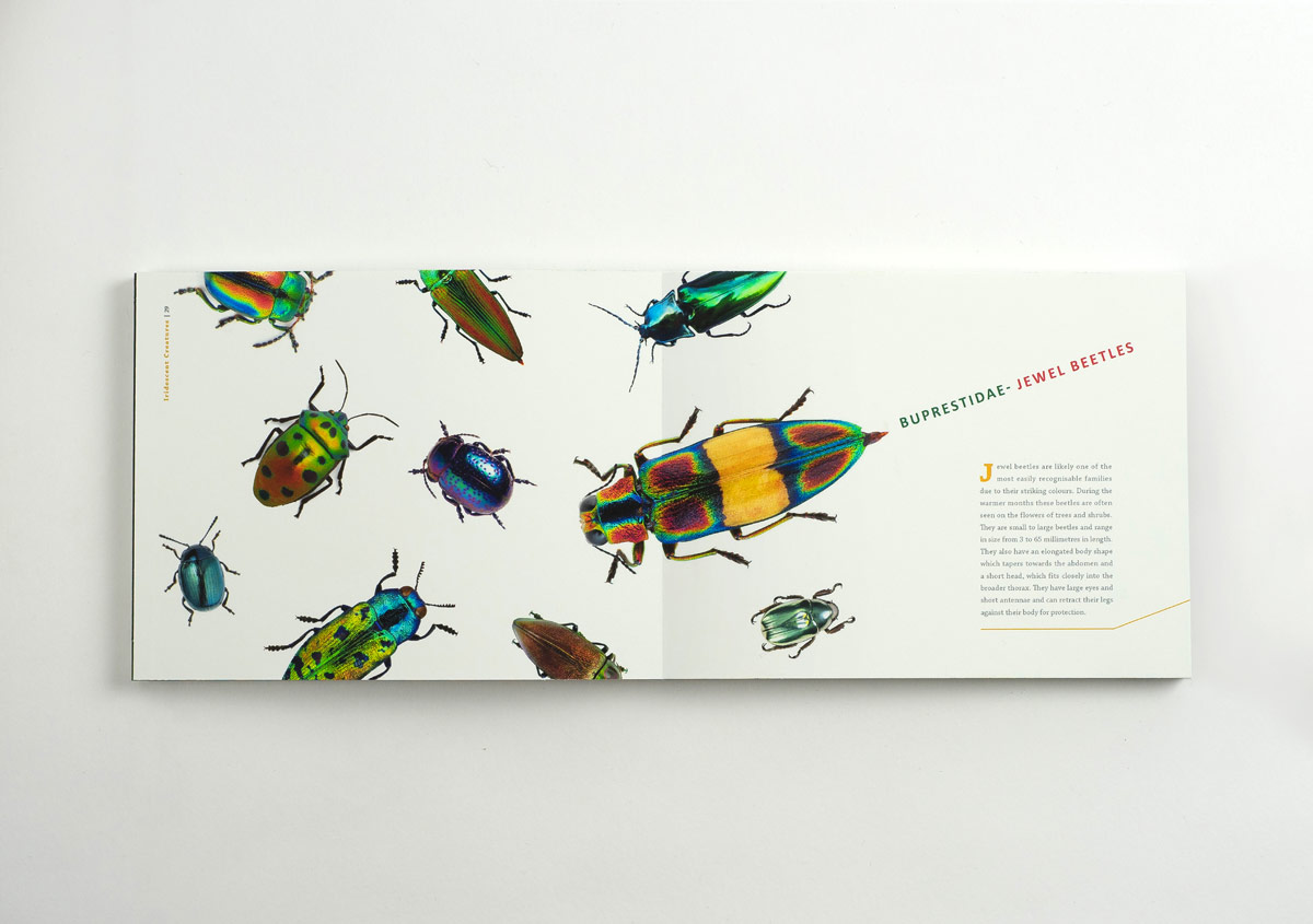 Iridescent-Creatures-catalog-21-Thanh-Nguyen-design