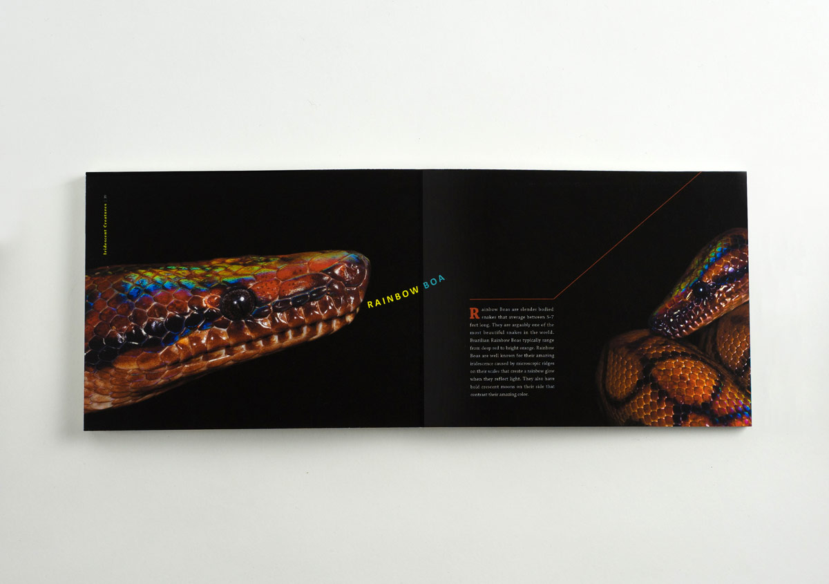 Iridescent-Creatures-catalog-26-Thanh-Nguyen-design