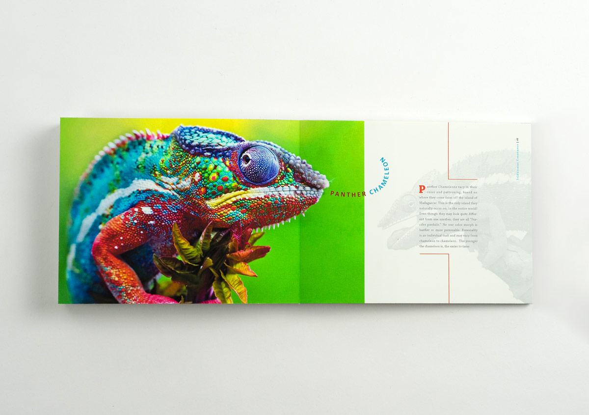 Iridescent-Creatures-catalog-28-Thanh-Nguyen-design