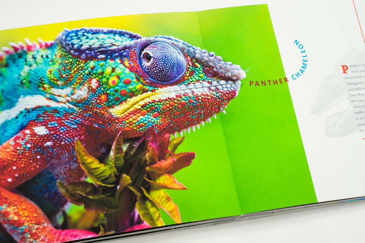 Iridescent-Creatures-catalog-29-Thanh-Nguyen-design