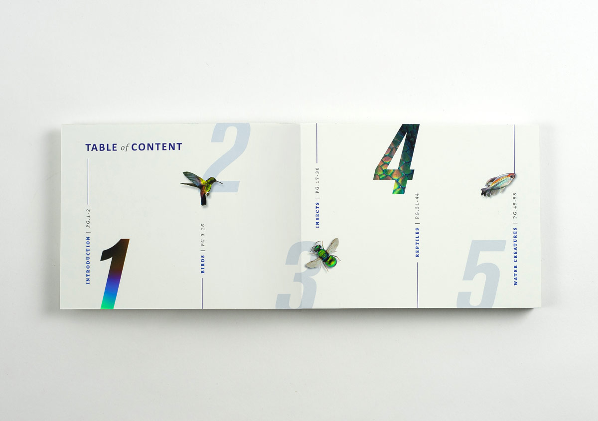 Iridescent-Creatures-catalog-3-Thanh-Nguyen-design