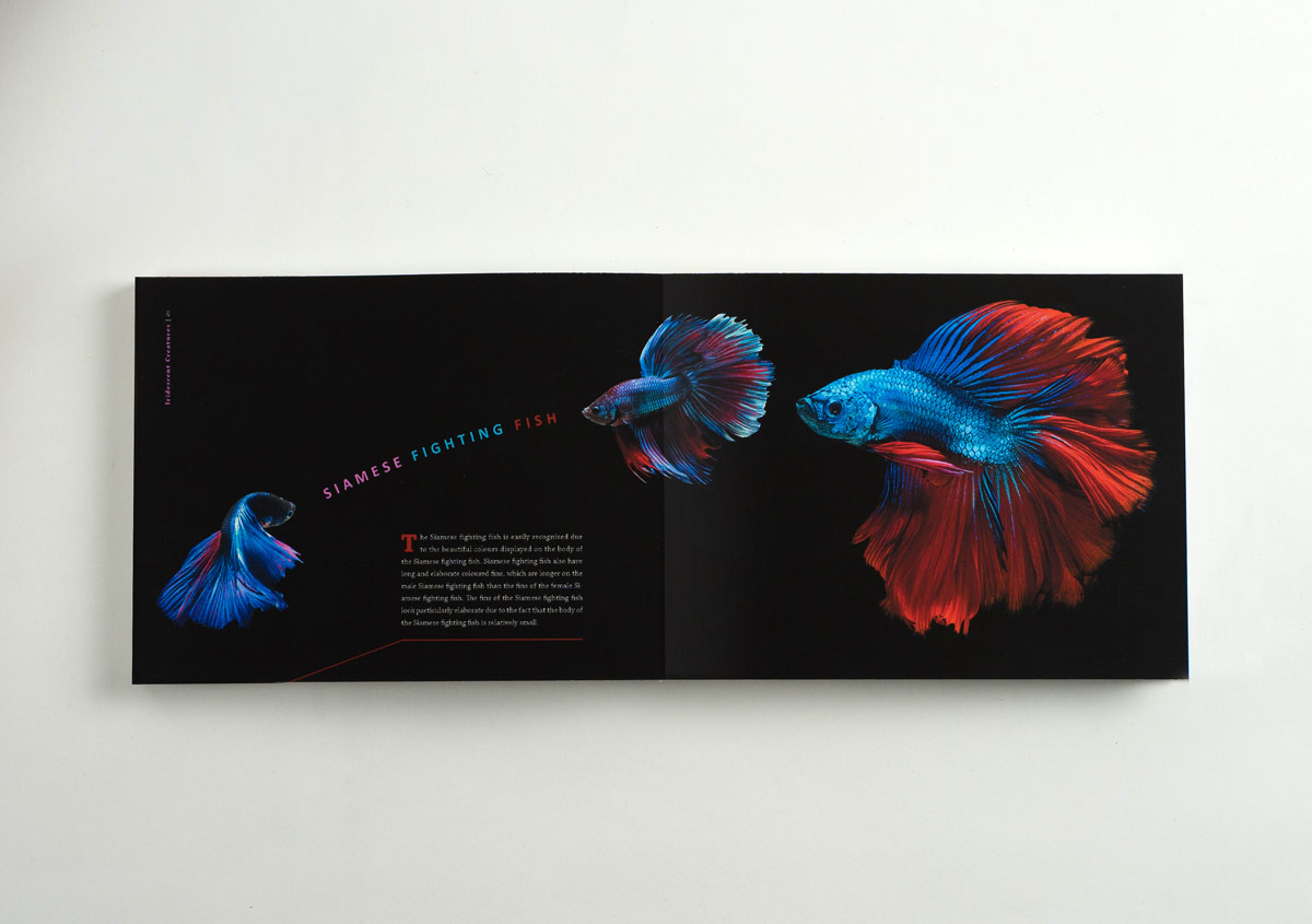 Iridescent-Creatures-catalog-32-Thanh-Nguyen-design