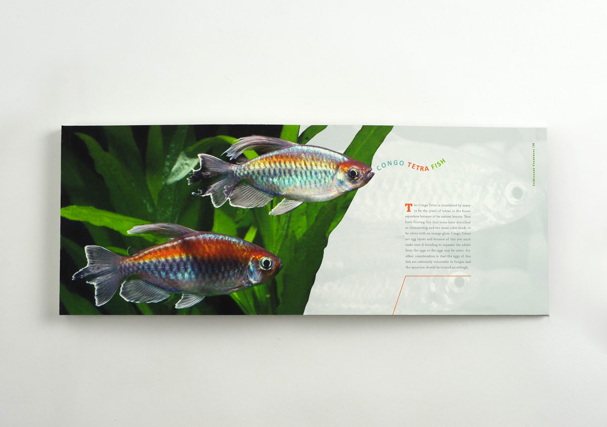Iridescent-Creatures-catalog-35-Thanh-Nguyen-design