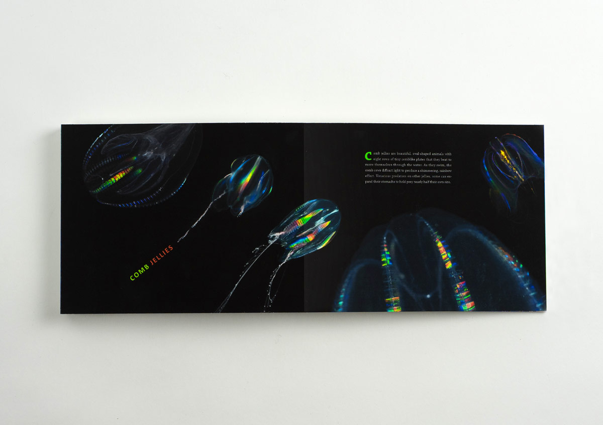 Iridescent-Creatures-catalog-37-Thanh-Nguyen-design