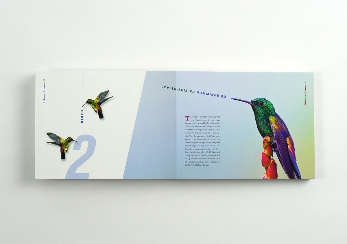 Iridescent-Creatures-catalog-5-Thanh-Nguyen-design