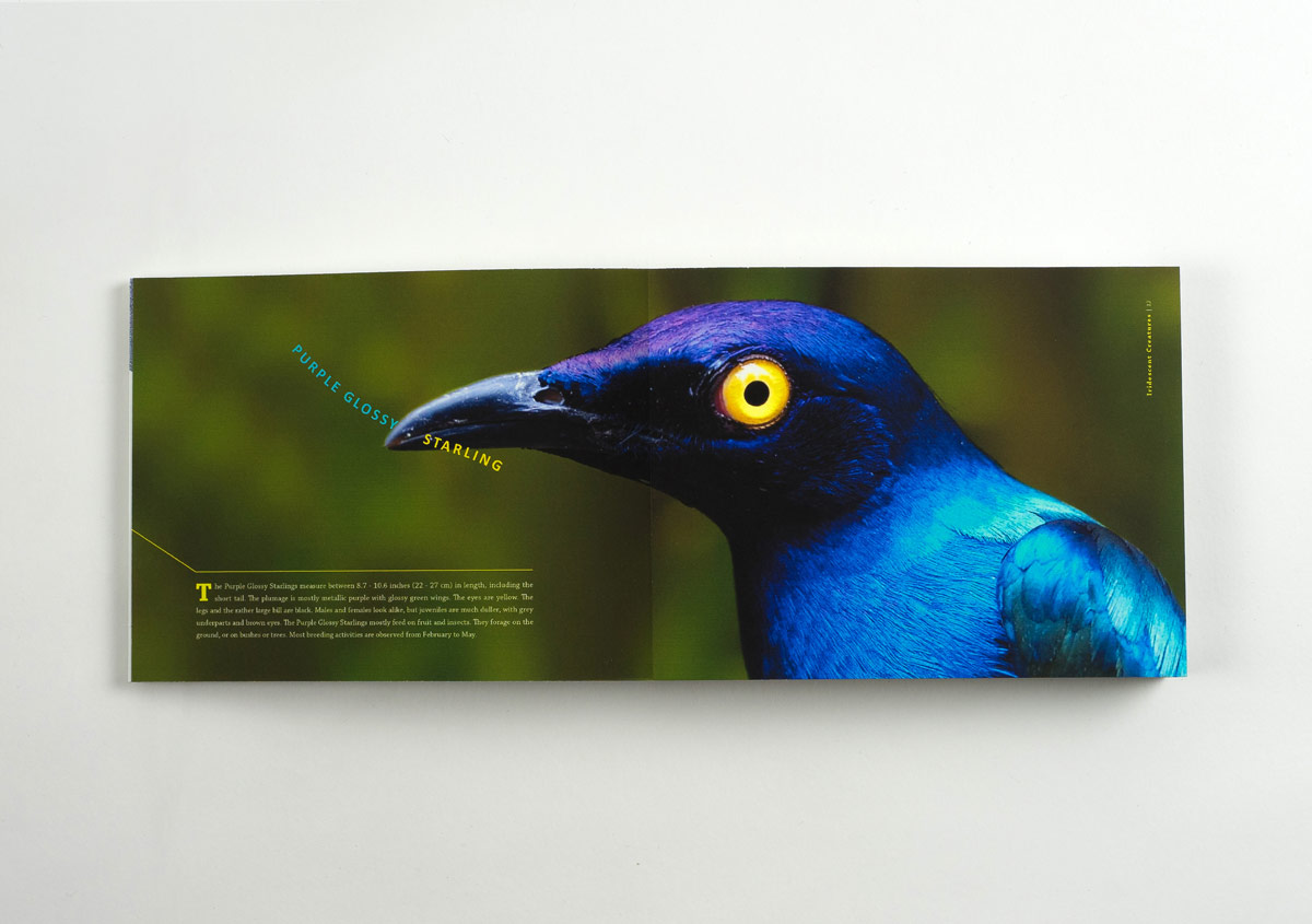 Iridescent-Creatures-catalog-9-Thanh-Nguyen-design